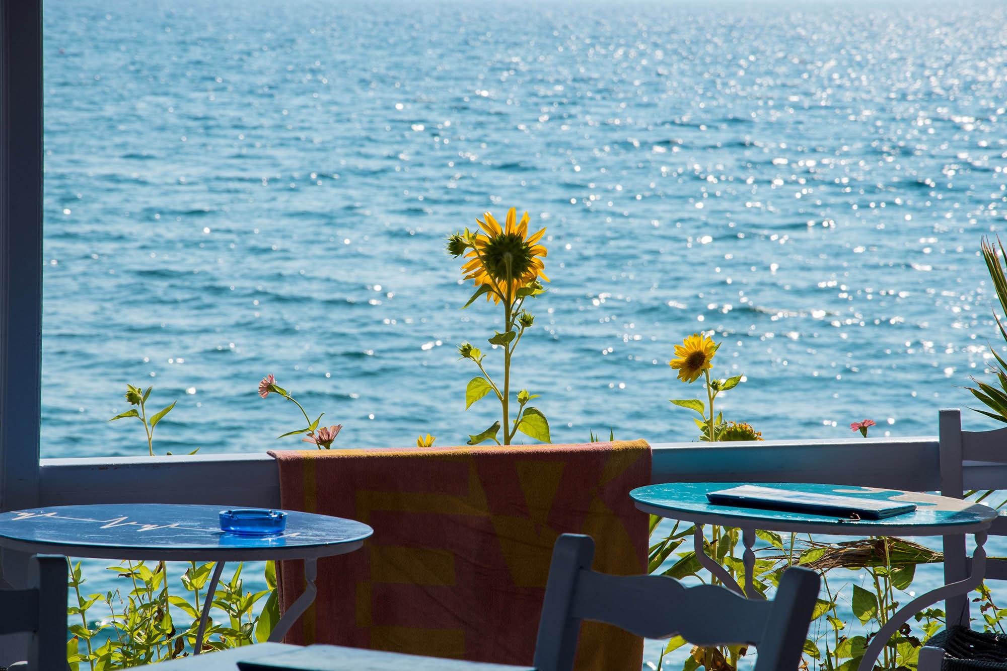 milelja serenity cafe view