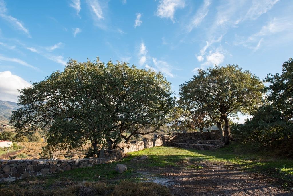 Milelja-Serenity trees